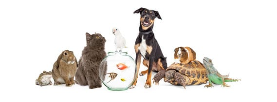 group of pets sitting together. PawPods