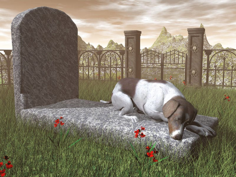 pet funeral of a dog